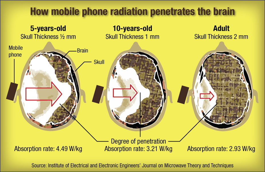Mobile Phone Radiation Absorption